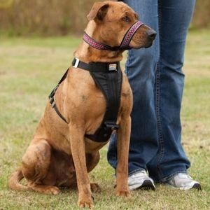 NWOT Kurgo Snout About Strap Dog Head Halter